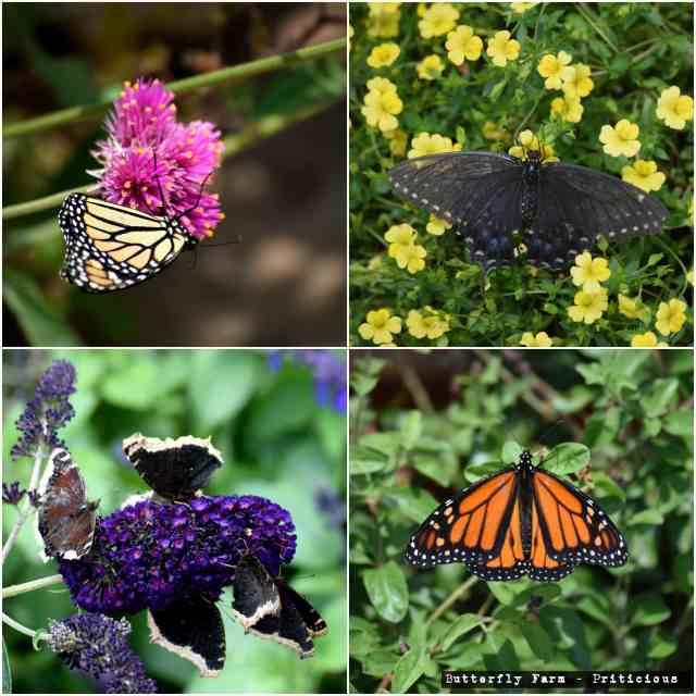 butterfly farm encinitas