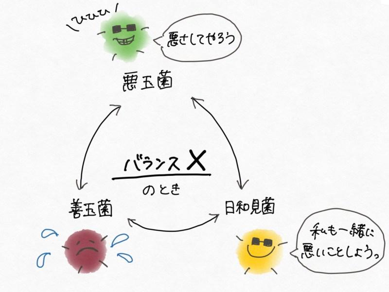 腸内細菌の重要性〜腸活・腸内細菌叢…結局どういうこと?〜3
