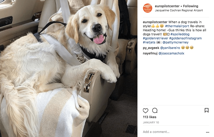 Golden Retriever on a private jet