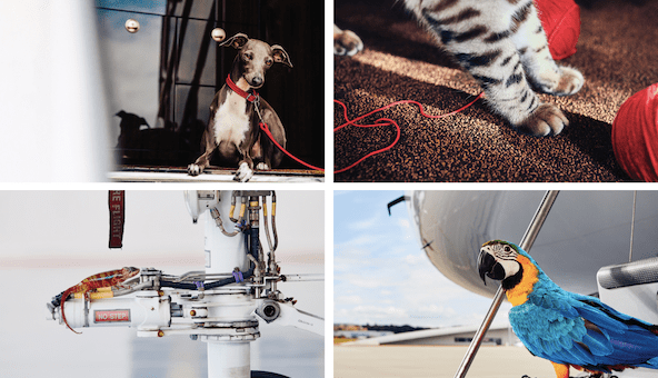 VistaJet is launching VistaPet for UHNW pets on private jets
