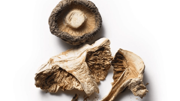 Mushrooms Are the Beauty and Wellness Superfood You Need Right Now