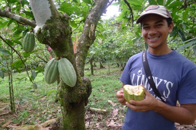 Cacao at Luna Nueva