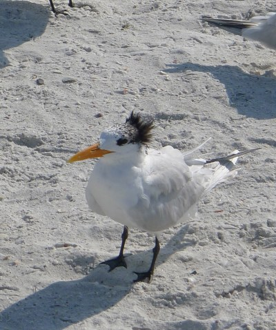 punk seagull