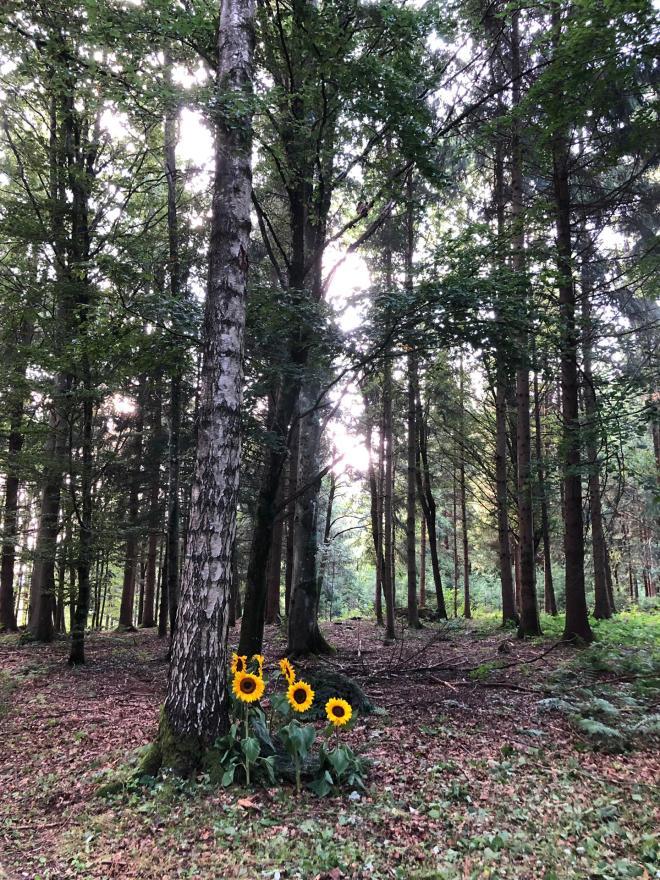 Waldfriedhof2_2019