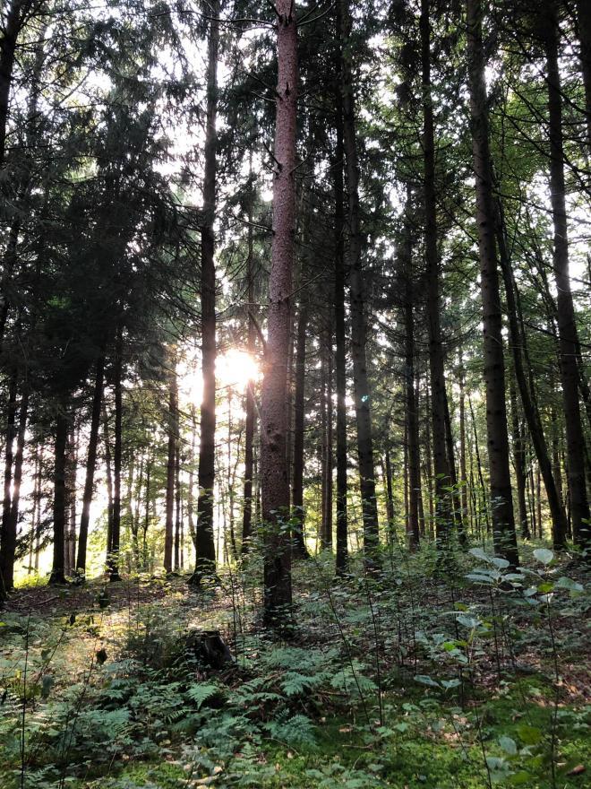 Waldfriedhof4_2019