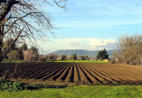 Vlada FBiH: Poticaji Poljoprivredi 68.700.000 KM I Veterinarstvu 2.500.000 KM