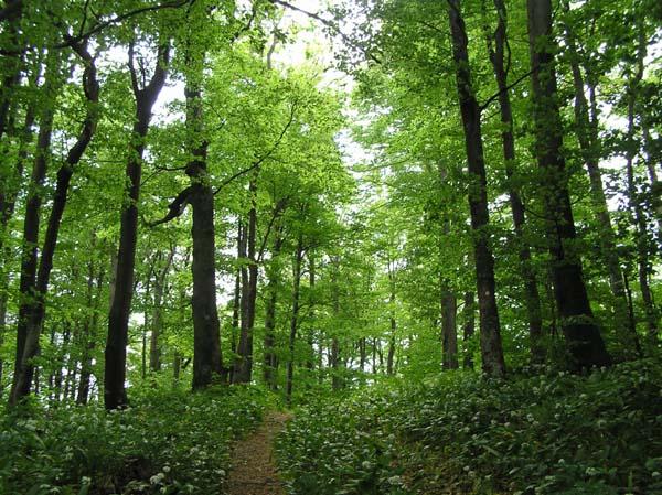 Novim Zakonom Utvrđuju Se Odgovornosti I Sankcije U Oblasti šumarstva