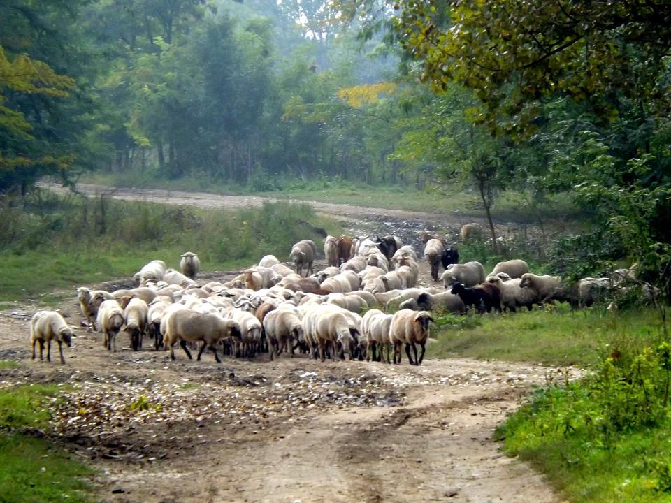 Federalno Ministarstvo Poljoprivrede Traži Pojačanu Kontrolu životinja