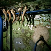Deer horns in the shed of Galina Konyushok's house. Hunting is strictly forbidden in the Zone, due to high levels of radioactive contamination.