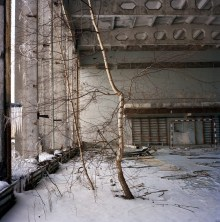 Birch tree growing through the floor of an abandoned gym in the ghost town of Pripyat. Following the radioactive fallout after the nuclear accident...