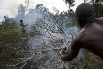 The illegal practice of tavy, or slash and burn agriculture, is one of the most urgent threats to Madagascar's people and forests. As farmers...