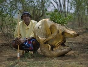 Samburu Elder, Lemasulani Letarekeri, after performing healing ritual with skull of elephant killed by poachers, Namunyak Wildlife Conservancy