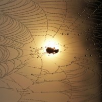 Insect Caught in A Spiders Web