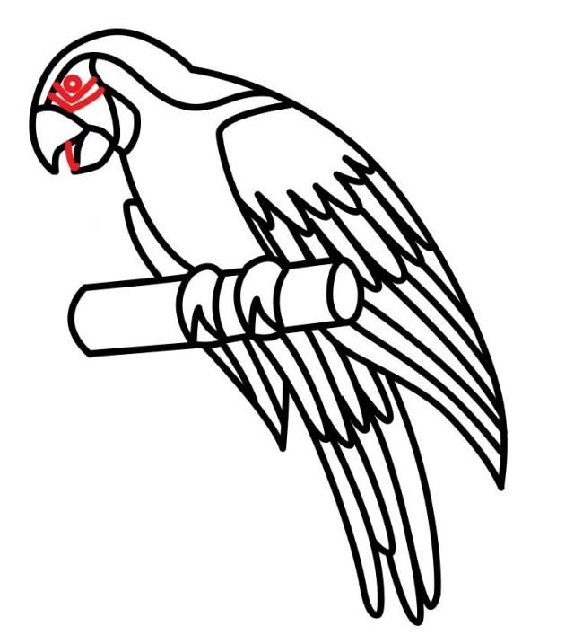 01. Как нарисовать попугая поэтапно