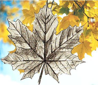 Рисуем Листья поэтапно