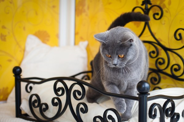 Kucing di hotel