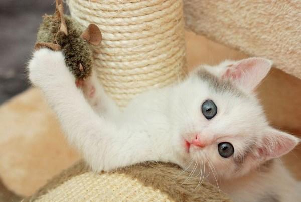 Hoe een kitten om te remmen
