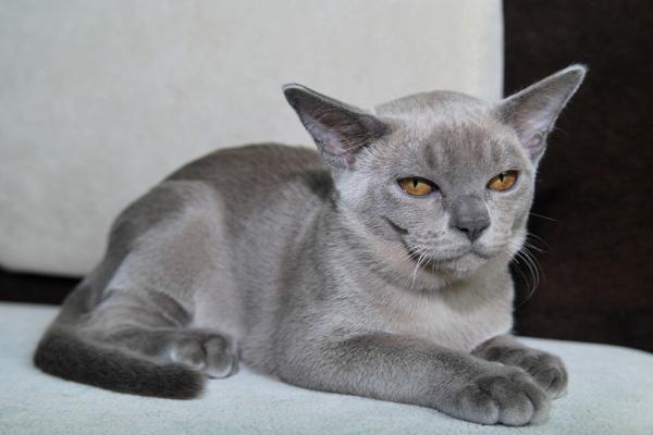 Warna biru Burma
