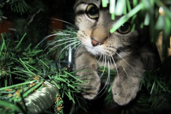 Seekor kucing memeriksa pohon Natal tanpa dekorasi
