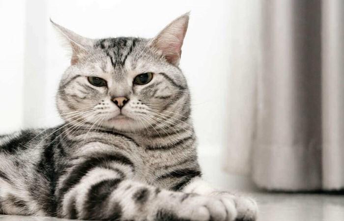 Kucing menyipitkan mata