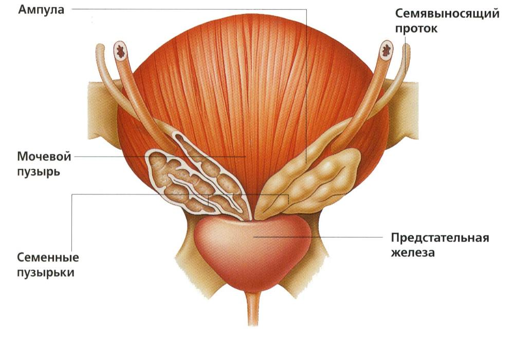 Az alsó hátfájás lehetséges okai nők és férfiak körében