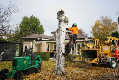 proarb canterbury felling trees