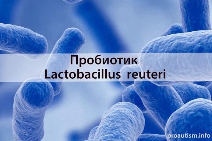 пробиотик Lactobacillus reuteri