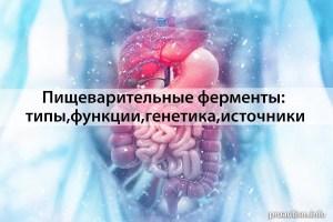 Пищеварительные ферменты: типы, функции, генетика
