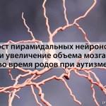 Рост пирамидальных нейронов и увеличение объема мозга во время родов при аутизме