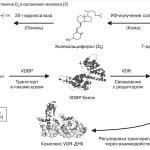 метаболизм витамина Д