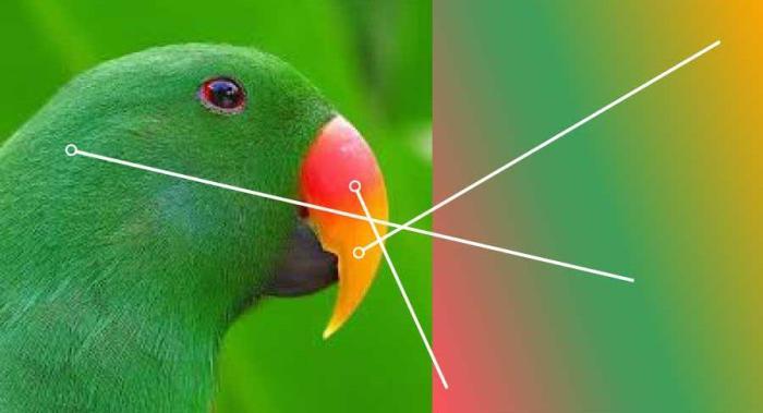 parrot-color-adjust