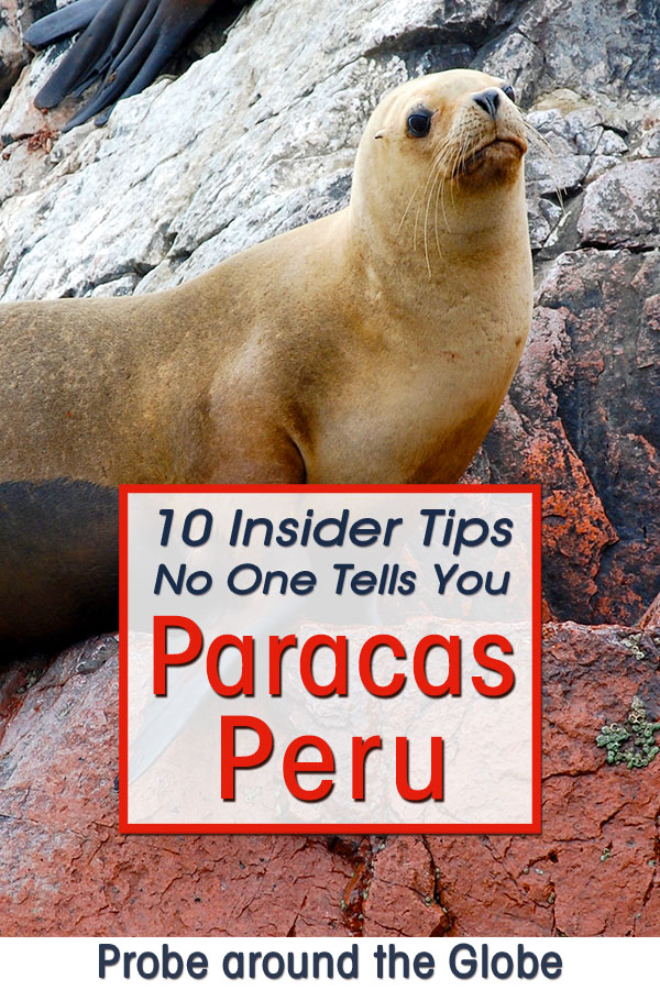 Image of a sea lion on the cliffs during a Islas Ballestas tour by boat from Paracas Peru. Text overlay saying: 10 insider tips no one tells you Paracas Peru, Probe around the Globe.