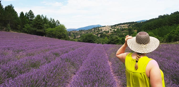 Colours of the Provence France