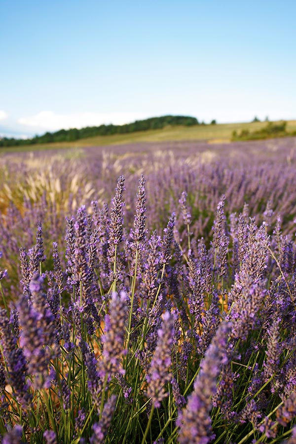 The Provence in the South of France is an inspiration and famous for the iconic colours of the Provence. I present to you: white, red, purple and yellow