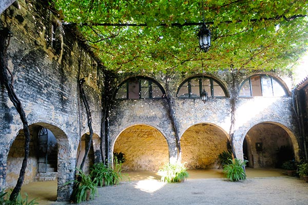 vine overgrown court yart at the Gonzalez Byass sherry bodega during the sherry tasting tour in Jerez de la Frontera.