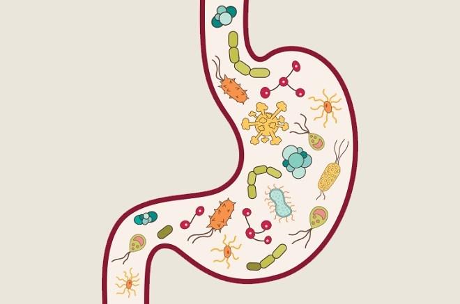 Probiotics America  Foods Not To Eat