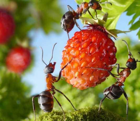 Факты о муравьях