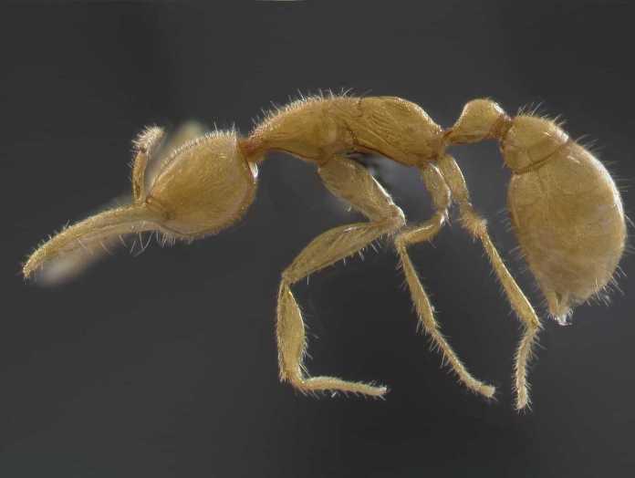муравьи с Марса