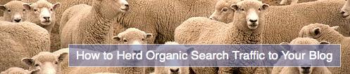 herd search engine traffic