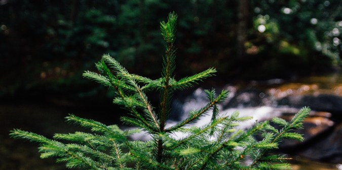 Top tips for creating evergreen content on your blog | at problogger.net