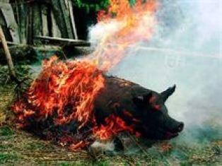 Un porc depistat cu cisticercoza a fost ars in incineratorul Directiei Sanitar Veterinare