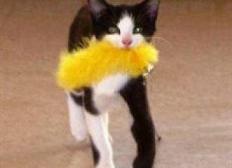 Mai multi detinuti au dresat o pisica, pentru a-i ajuta sa evadeze; smecheria a fost descoperita de un gardian
