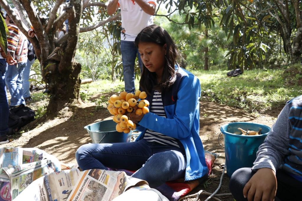 Festivales Nípsero y Flores (5)