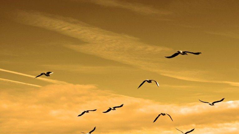 Líderes e liderados: qual é o seu papel?