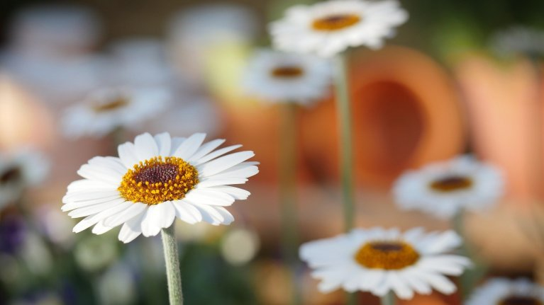 Nessa primavera, traga prosperidade e crescimento para sua vida