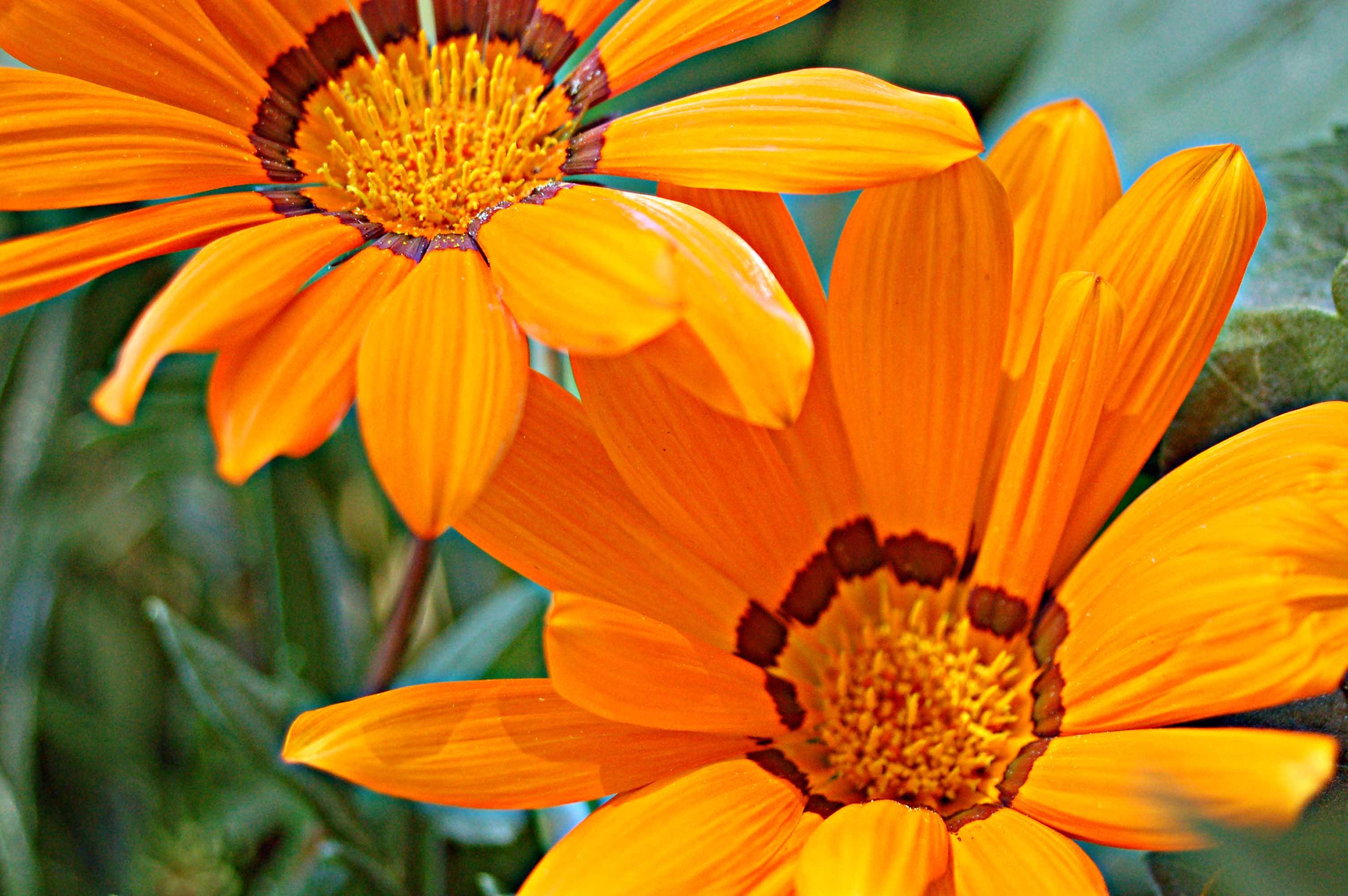 small-daisy11