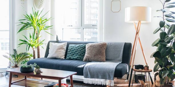 bright living room with simple couch and a few plants