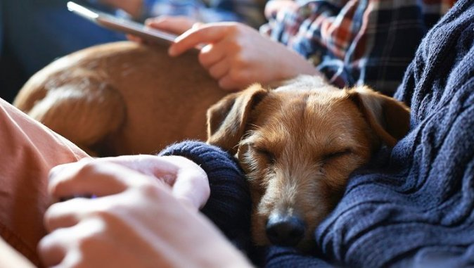 dog resting head in owner's lap while they are reading a tablet