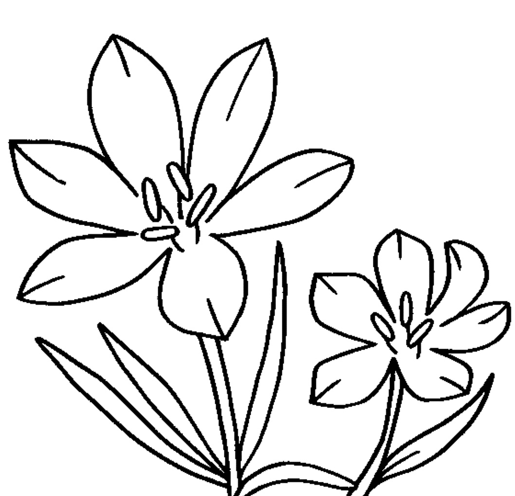 25 Flower Coloring Pages To Color