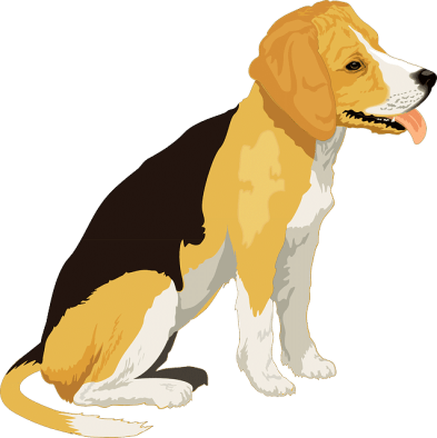 año del perro amarillo